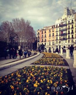 MADRID (7)